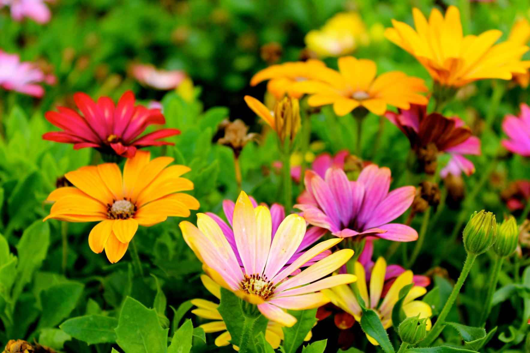 Name a flower in our virtual tribute garden for $18 image