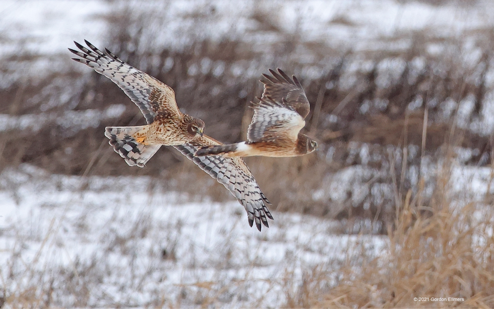 Make Your Gift to Grassland Birds Today! image