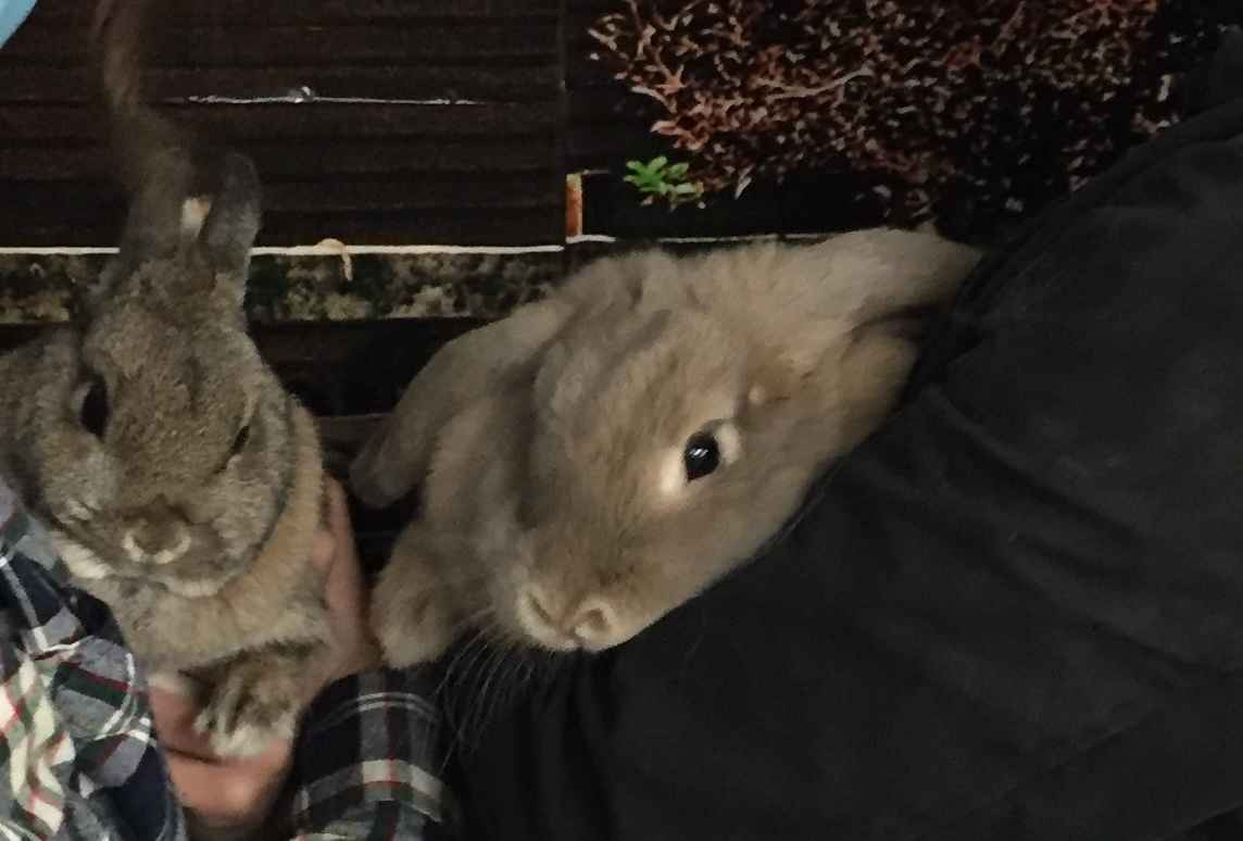 These rabbits were rescued from a horrible hoarding situation. Now we need to find them loving homes. image