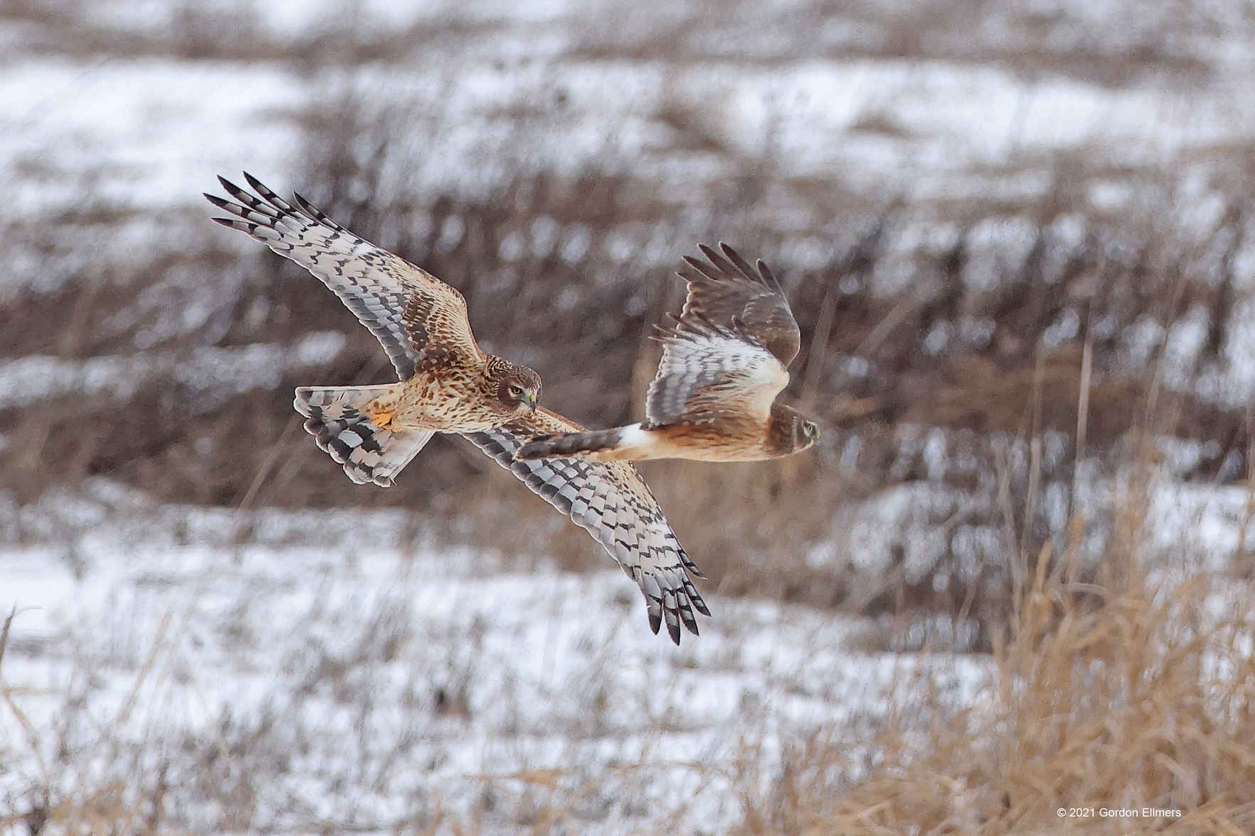Make Your Recurring Gift to Grassland Birds Today! image