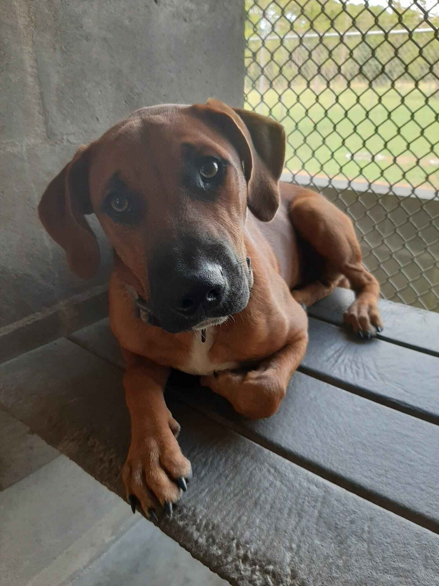 Help us help the unwanted dogs of Highlands County image