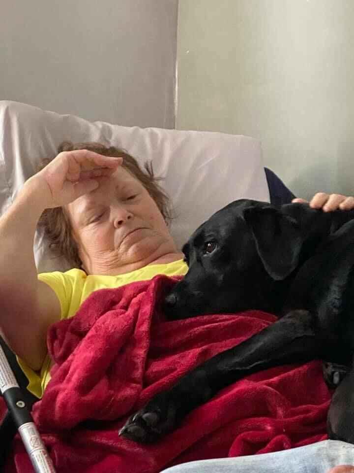 Please Support Suzie Belknapp's Love of Animals  image