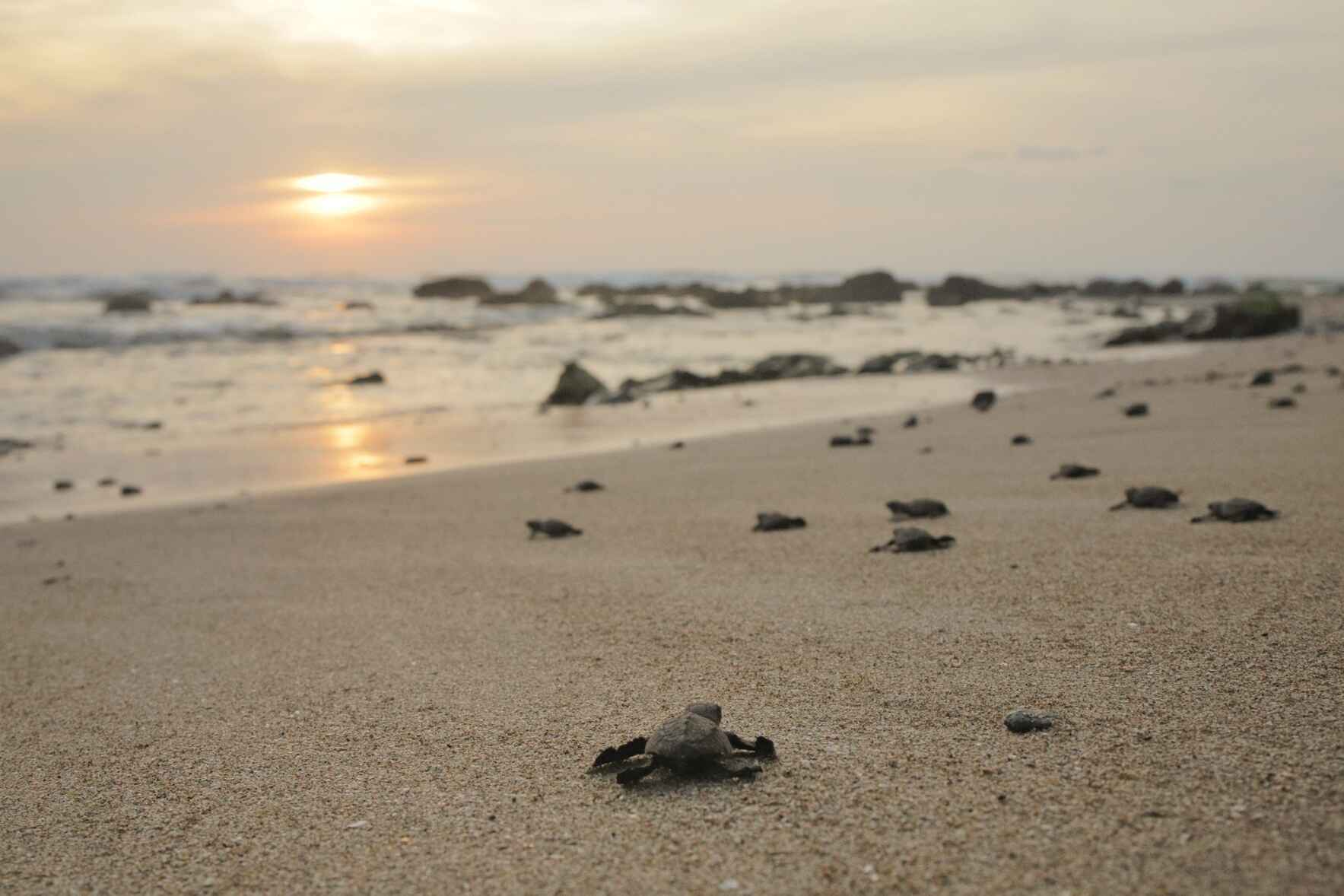 Help Protect Endangered Sea Turtles image