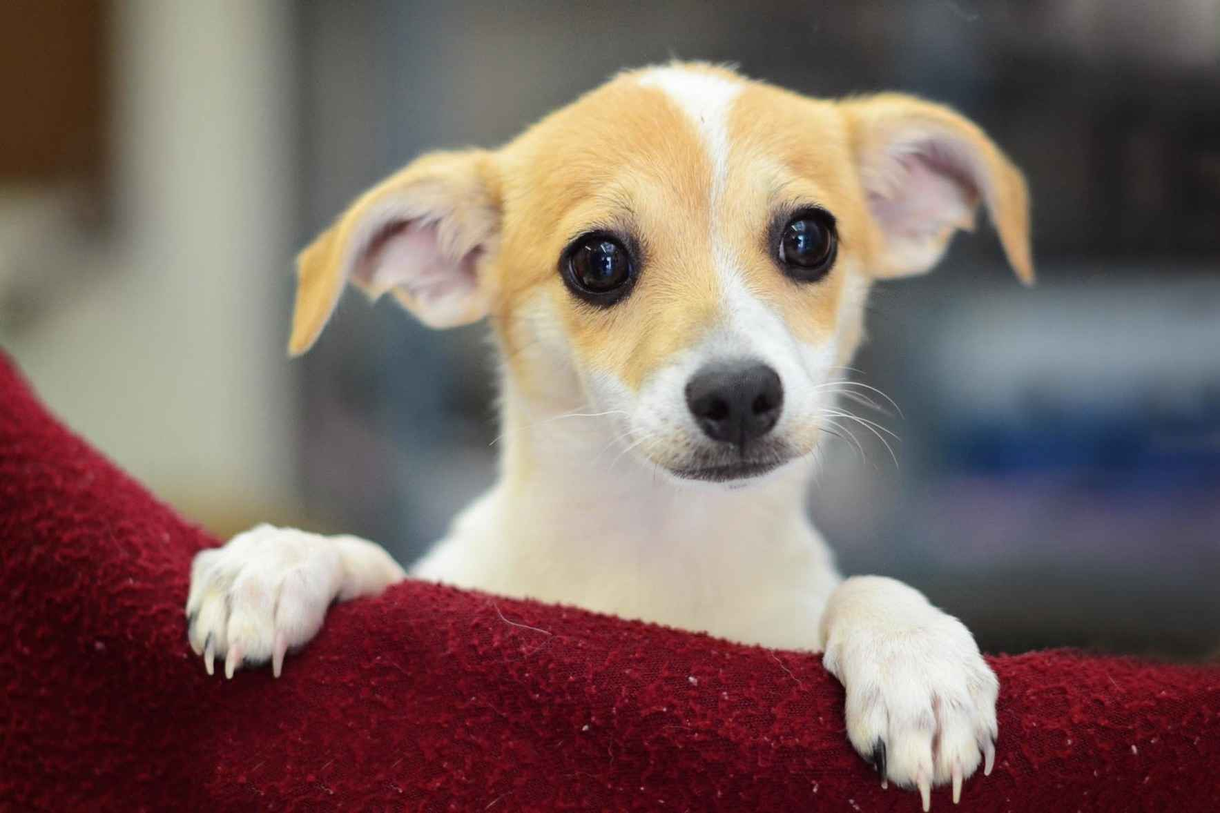 Give today to ensure we will always be here tomorrow to help so many pets in need. image