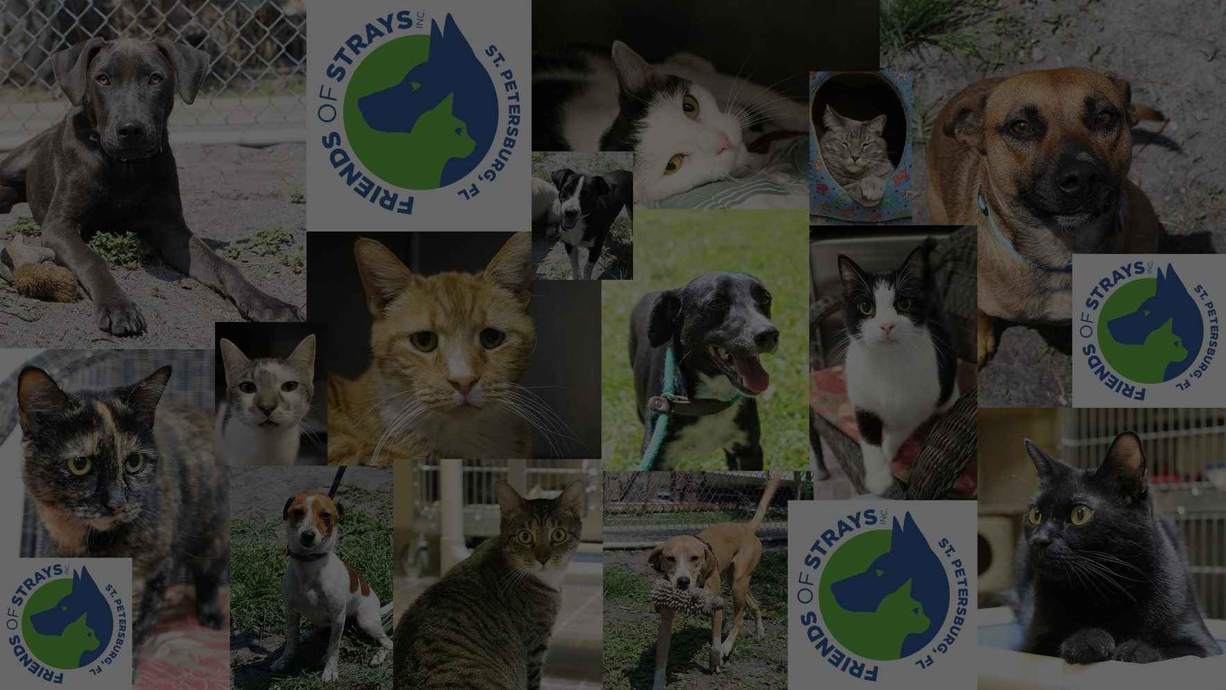 Help us keep homeless animals off the streets. image