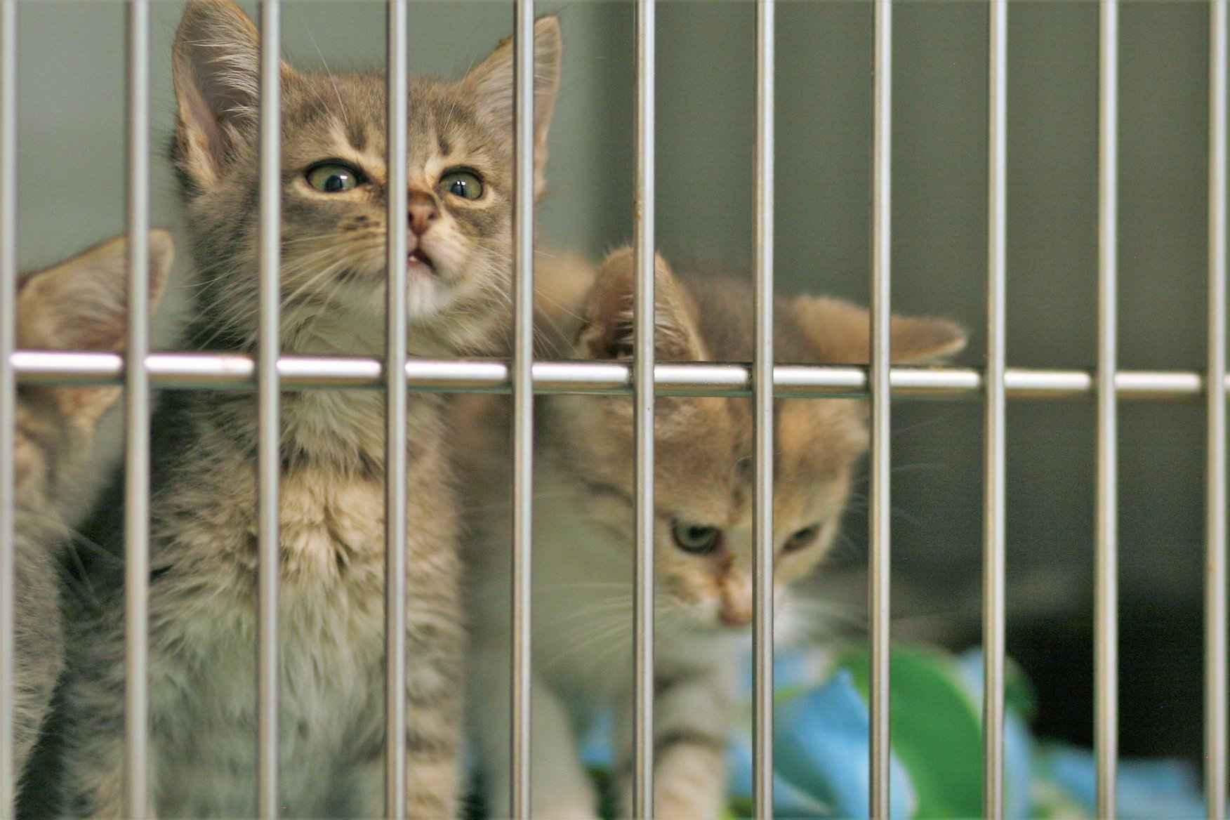 Denton Animal Support Foundation image