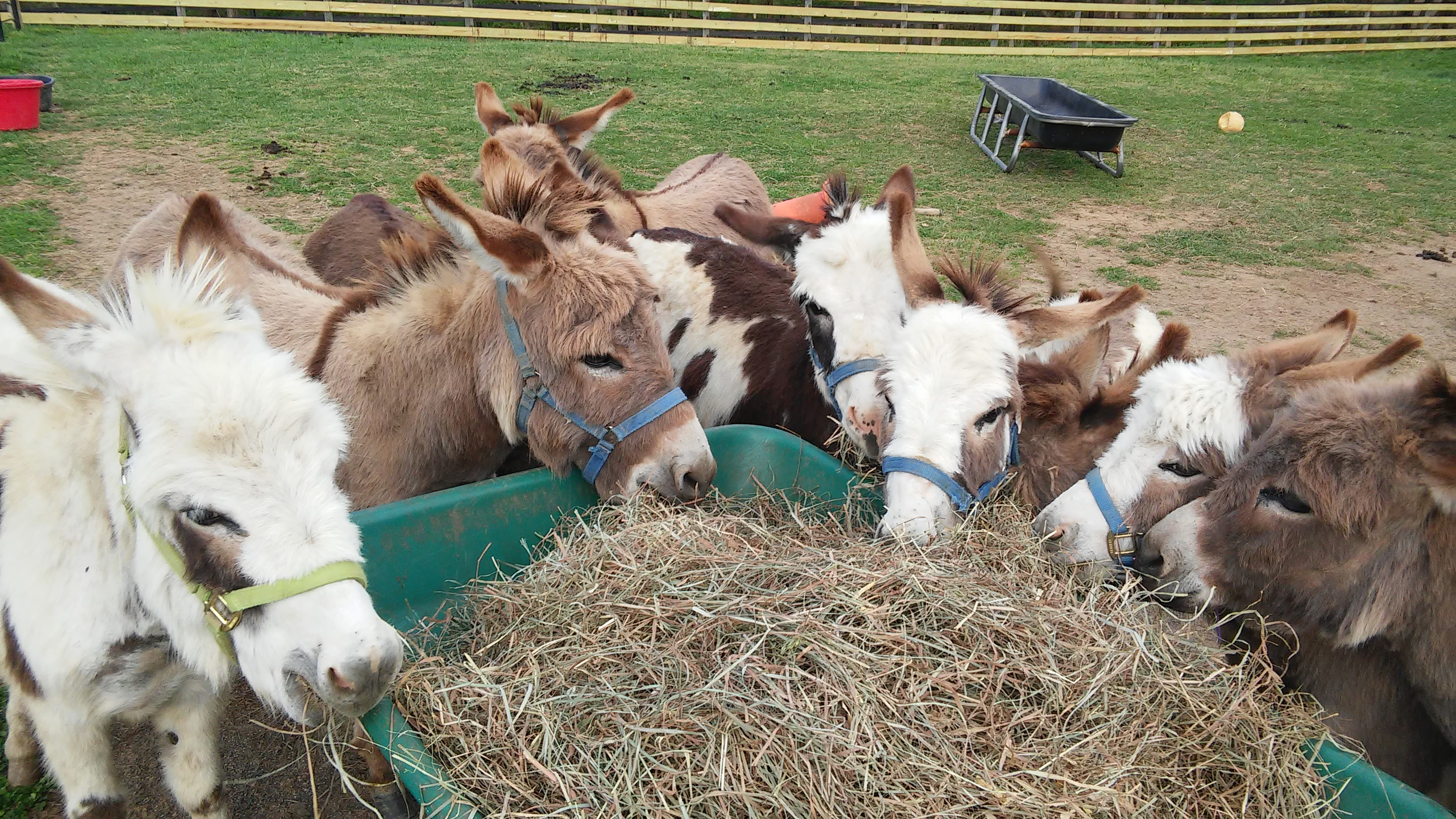 Donate Now to Help Rescue Miniature Donkeys image