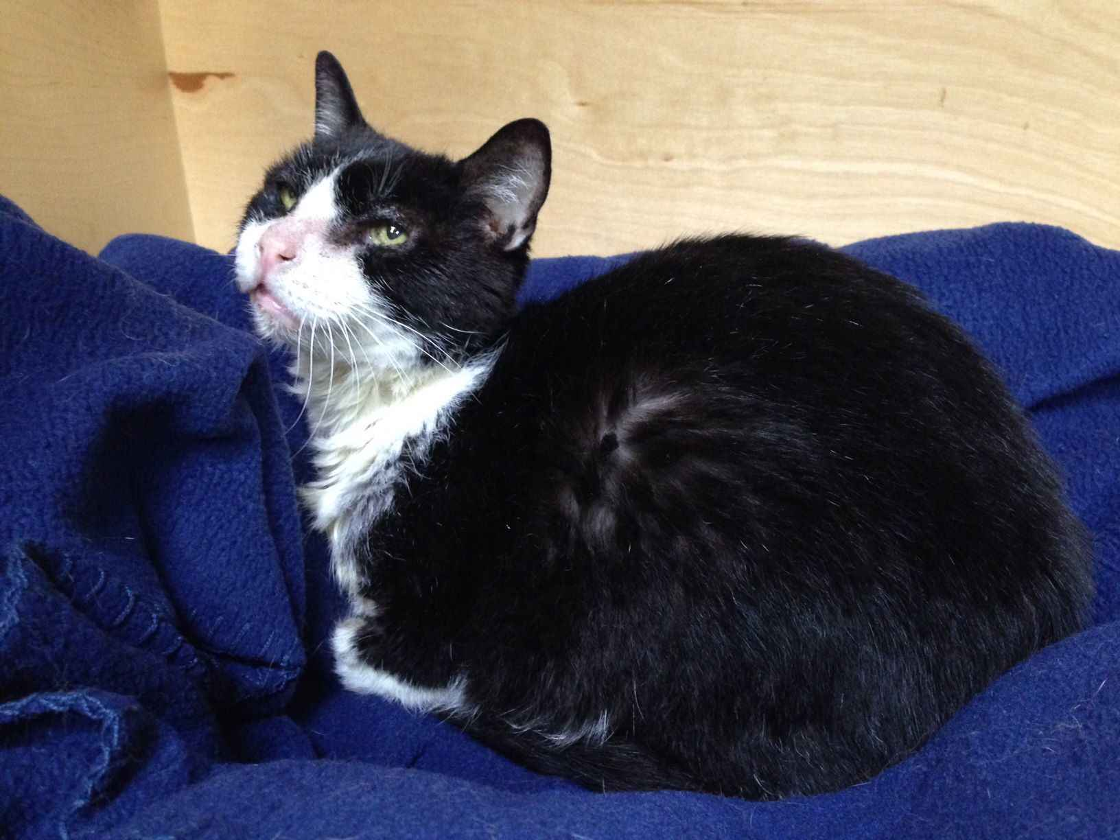 Sponsor A Special Needs Kitty image
