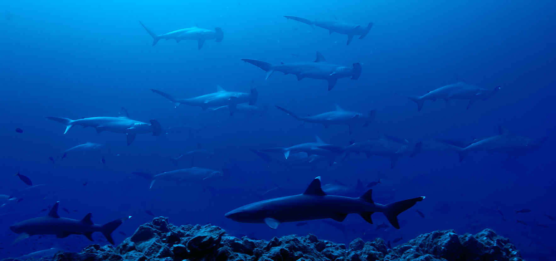Support Shark Science on Earth Day 2017! image