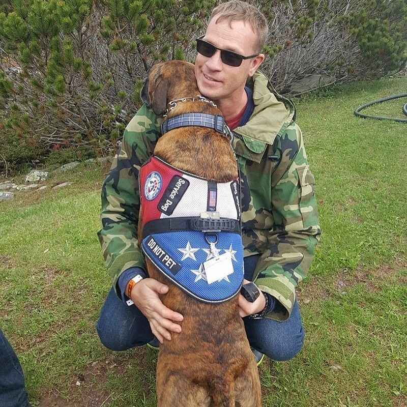 Sponsor a Paws of War dog in training! image