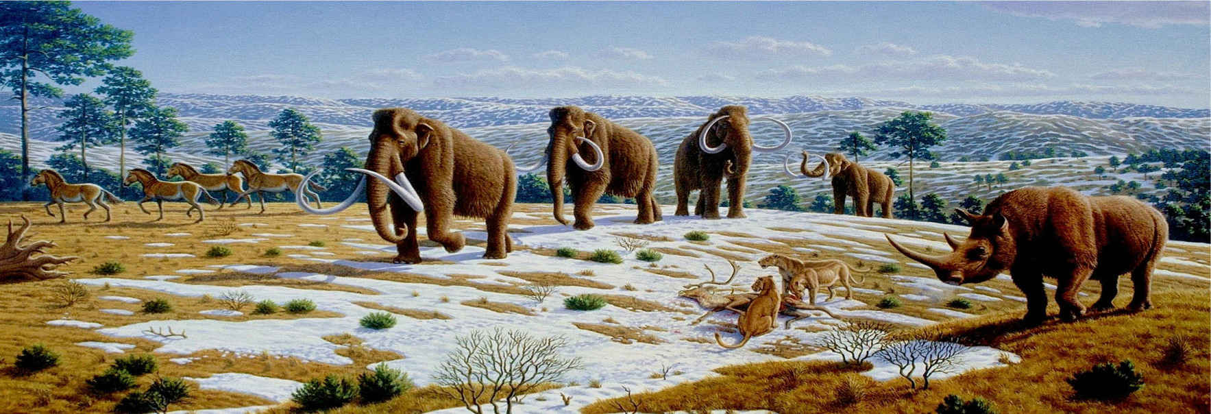 The book WOOLLY tells how the first steps have been taken to restore woolly mammoths to life and to the northern wild. image