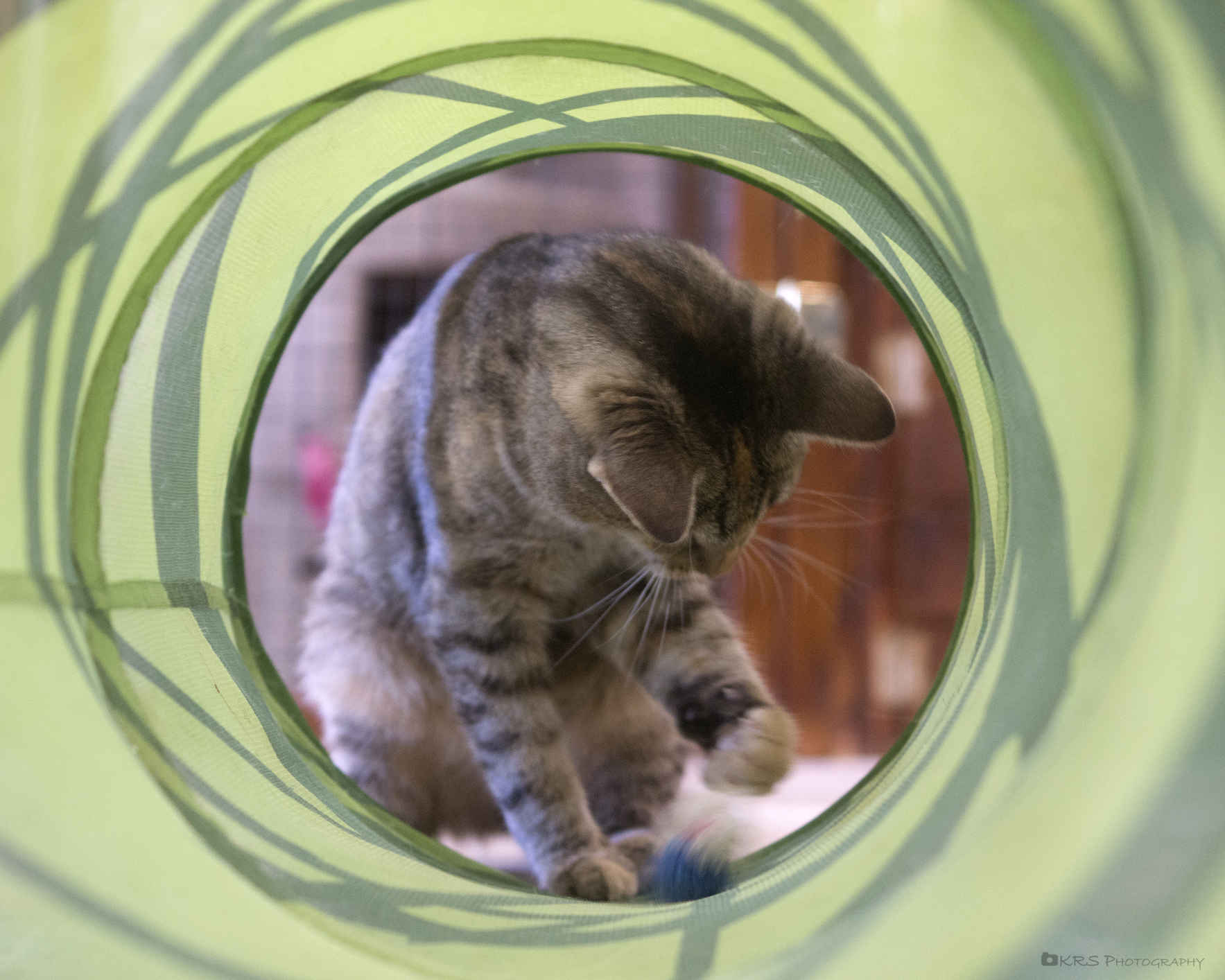 Become a Member of the Pet Pantry image