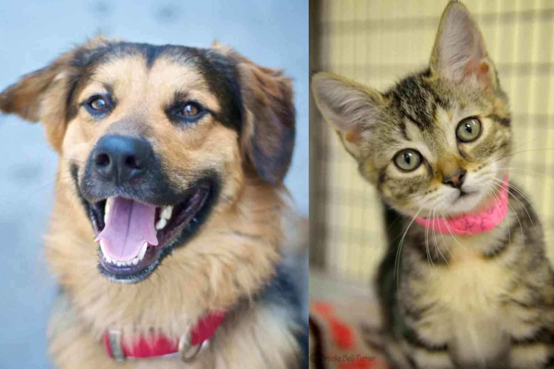 Help us find fur-ever homes for adoptable pets! image