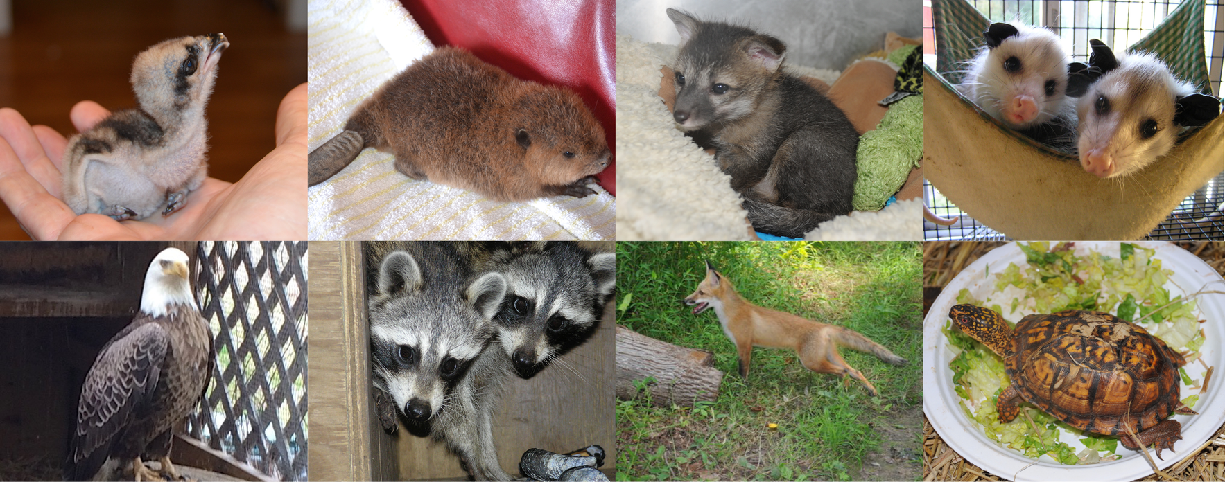 Support Wild Bunch Wildlife Rehabilitation image