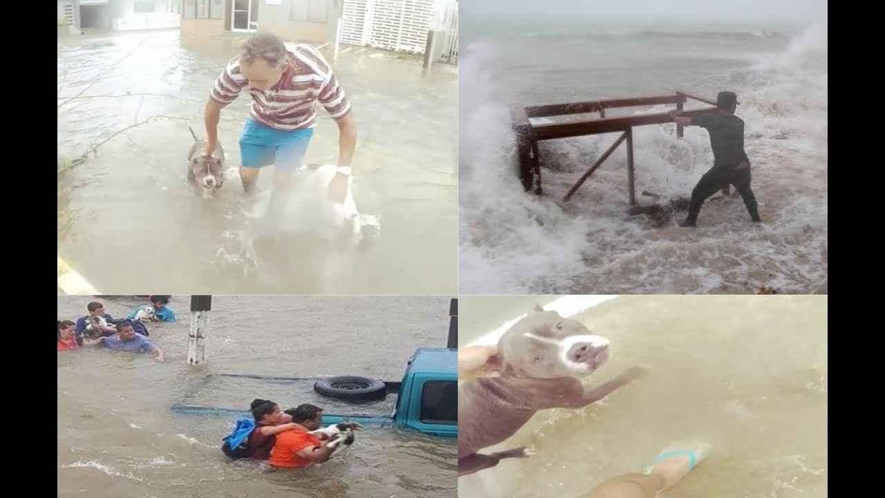 Saving animals impacted in Puerto Rico image