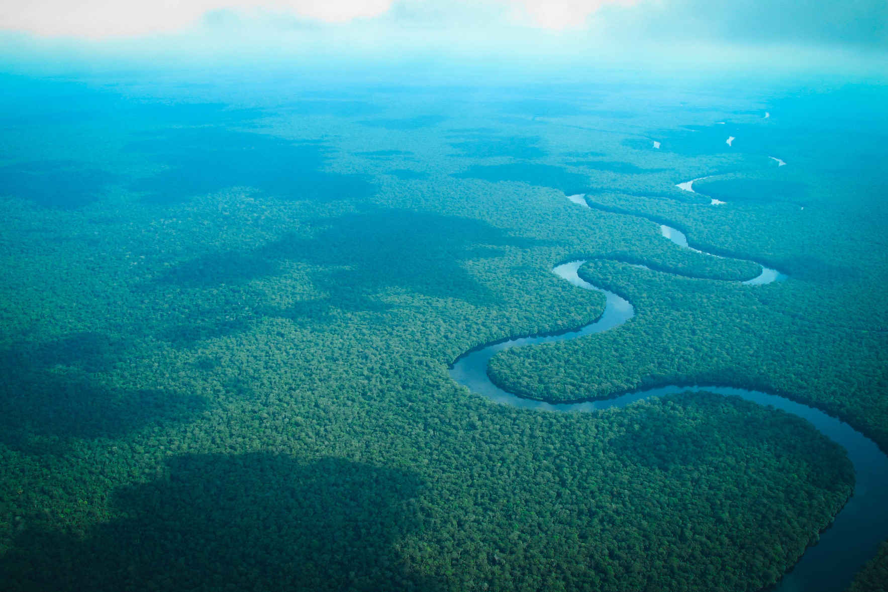 Become a Rainforest Sustainer! image