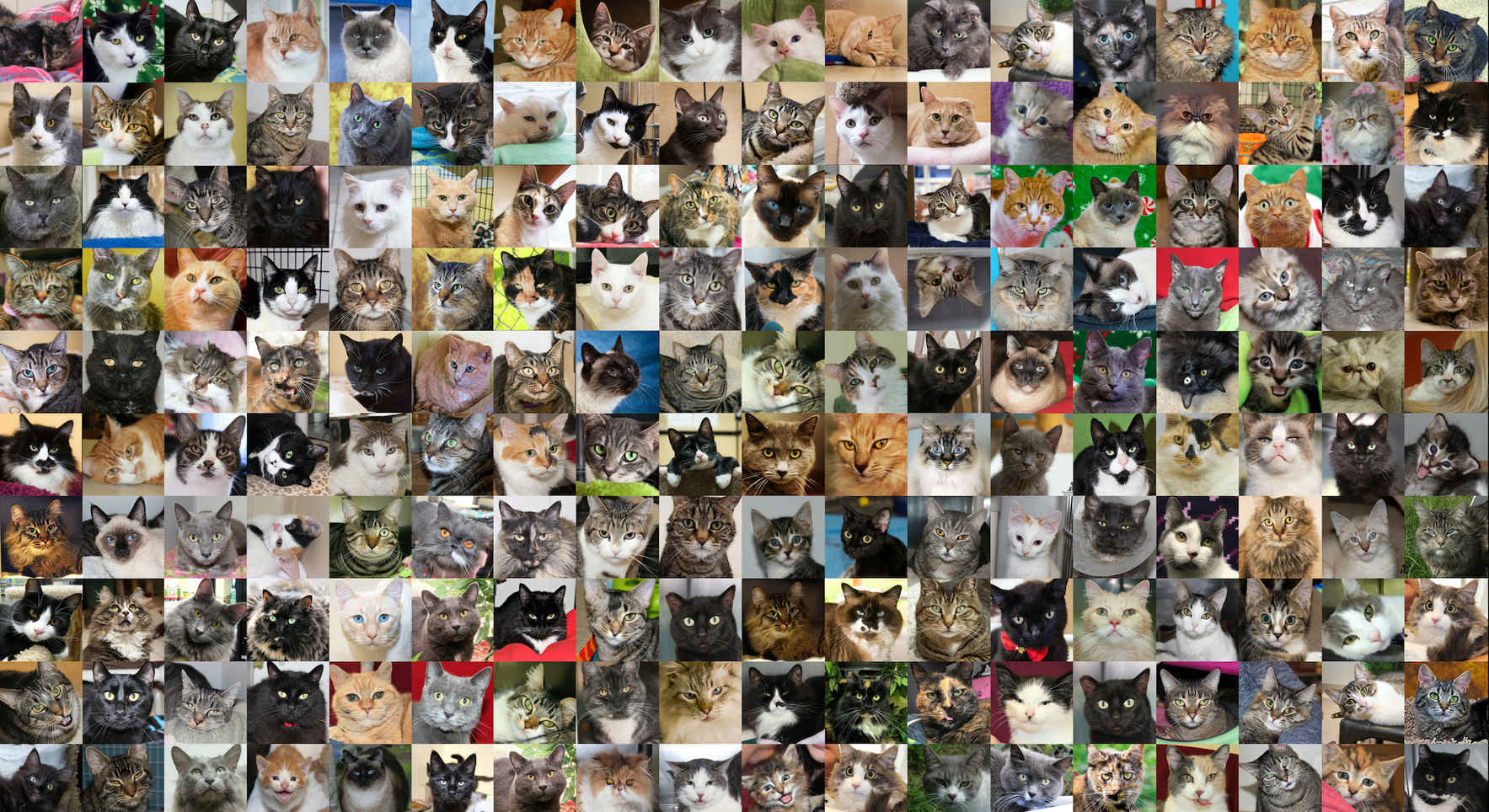 Let's Provide Second Chances for Special Cats and Kittens! image