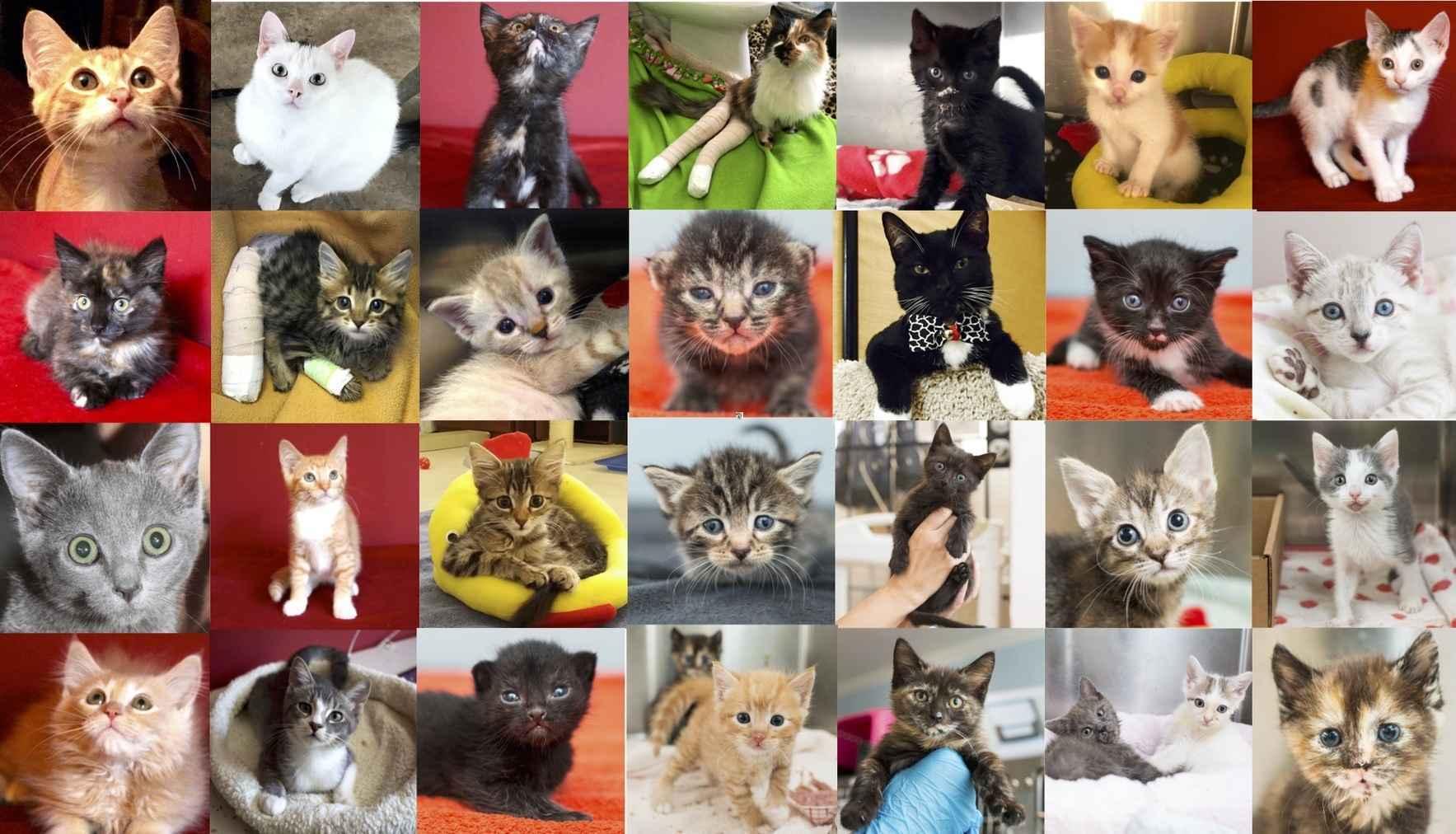Help Us Build a Kitten Adoption Center image