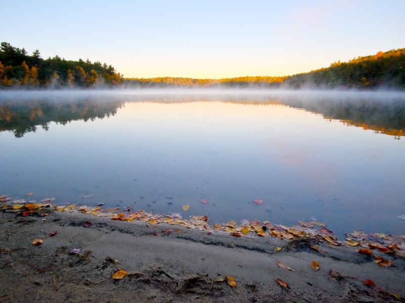 Support Friends of Walden Pond image