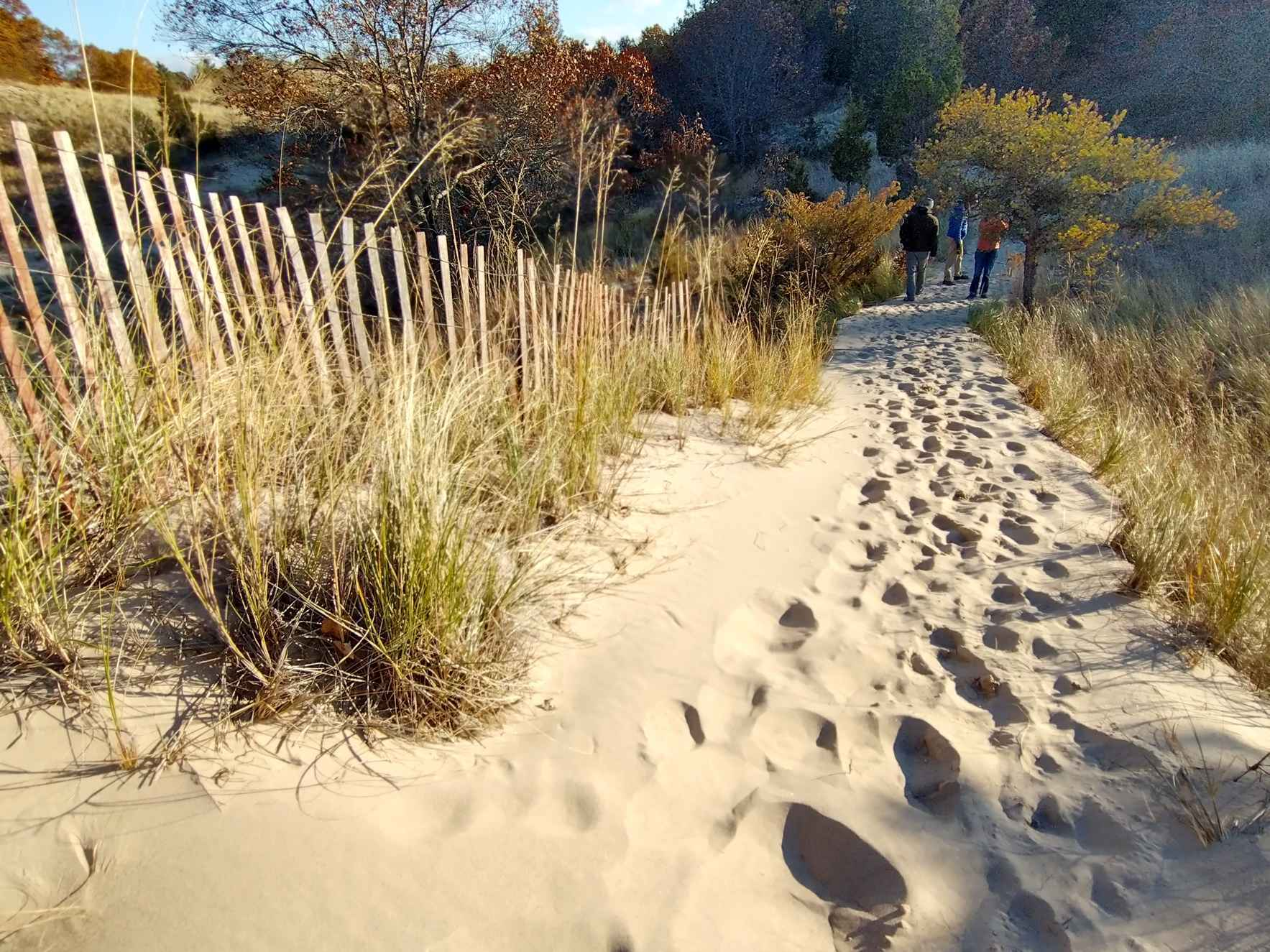 Give to Save the Dunes Today! image