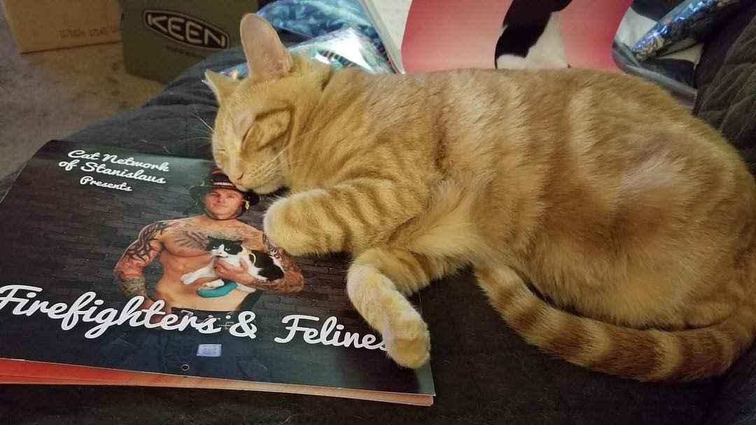 Help us spay a community cat  image