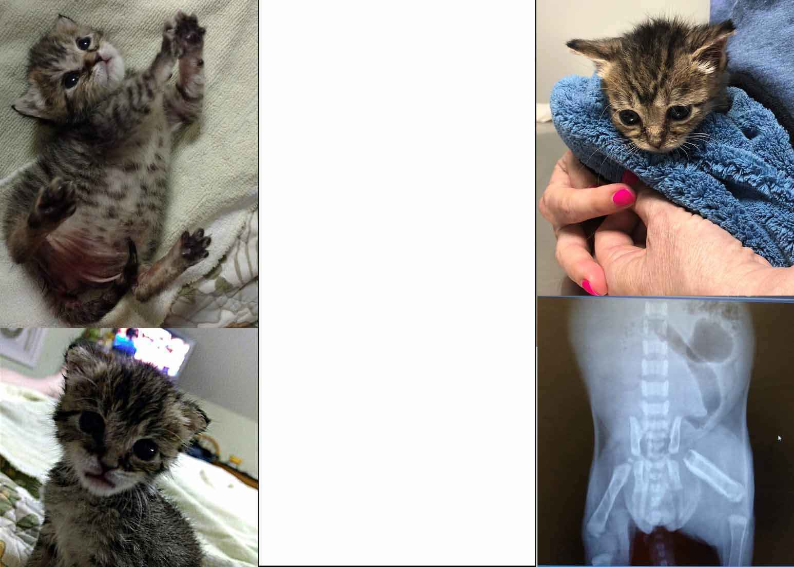 Minnie is a feisty fighter -- let's help her get healthy! image