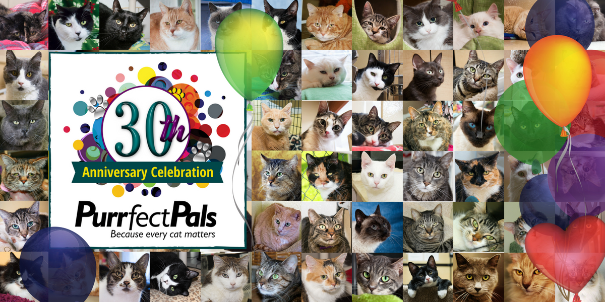 Give $30 to Purrfect Pals to Celebrate 30 Years of Second Chances! image