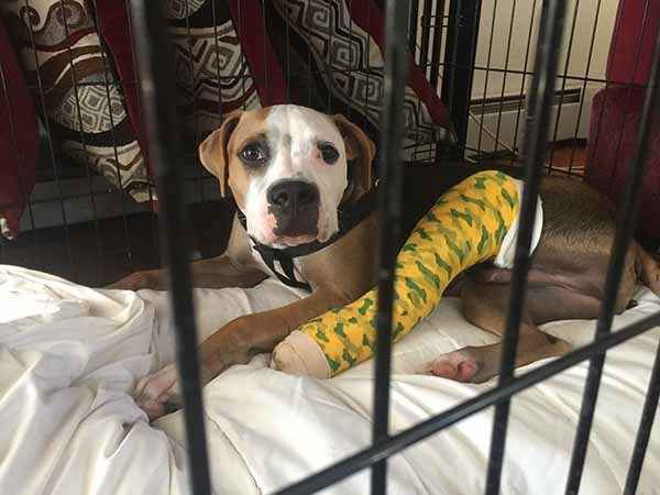 Pebey the puppy's family needed our help to fix his broken leg image