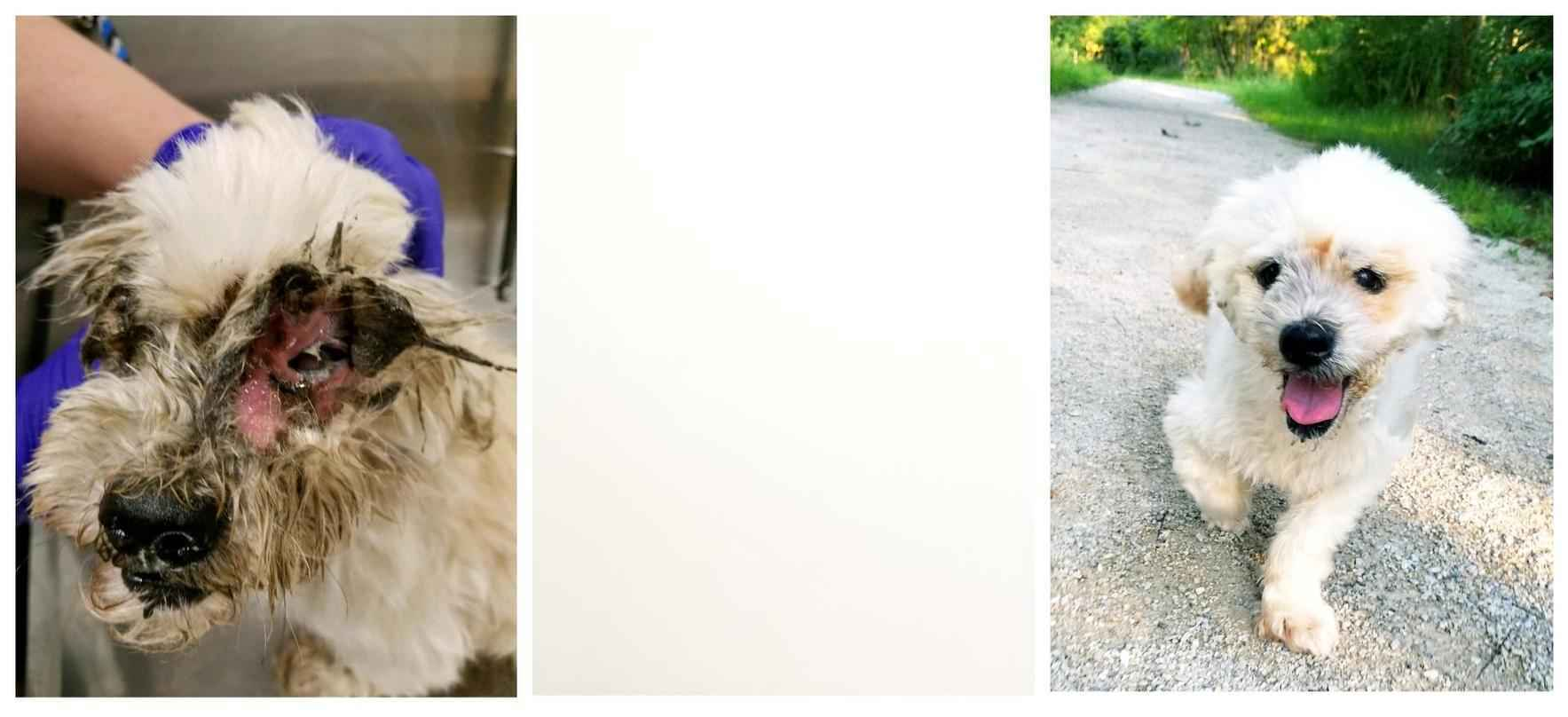 You can help sick and injured homeless cats and dogs image