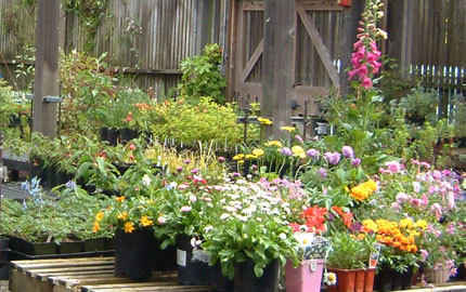 Support Merritt Horticulture Fall Plant Sale image