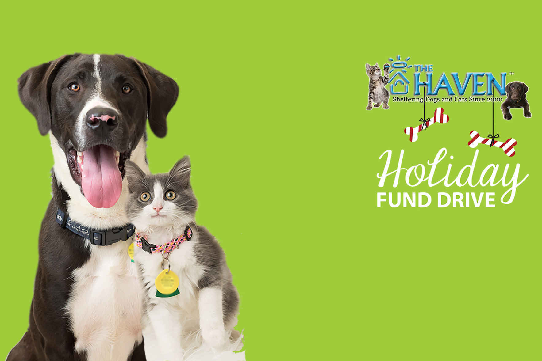 Give Today to End Pet Homelessness image