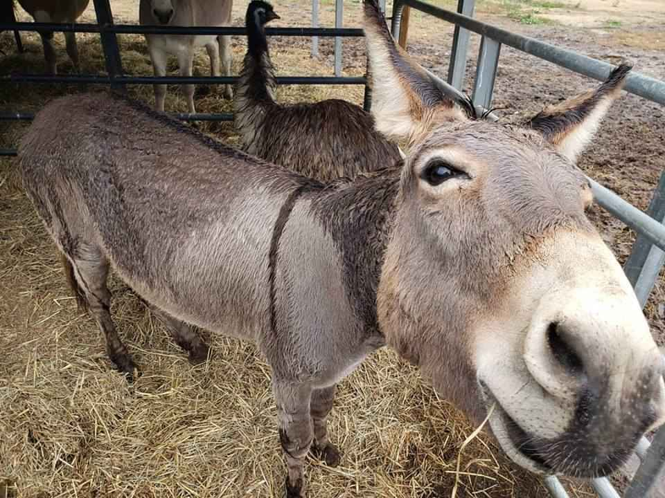 Donkey and Emu care and vet bills  image