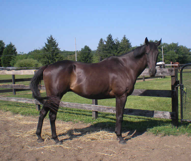 Make a difference in the life of a racehorse like Big Discovery image