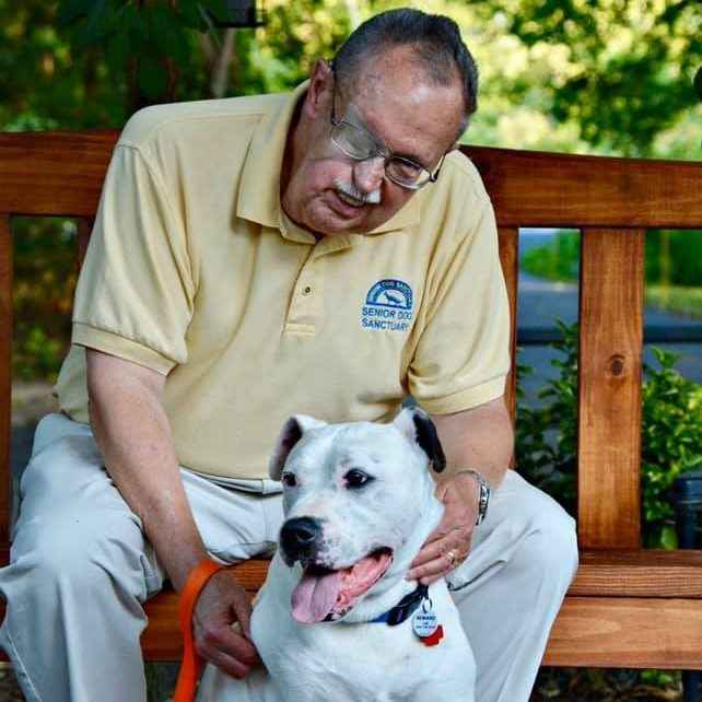 Rescue, Rehabilitate and Re-home our Seniors image