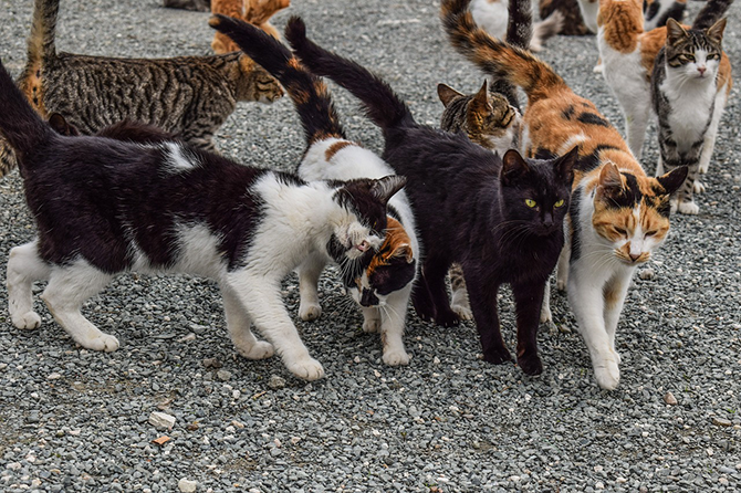 You can effect a change in the lives of community cats and those who love them!!! image