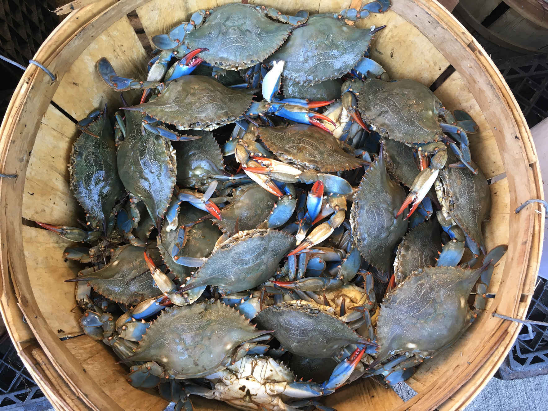 Sponsor The Clean Up. Keep Blue Crab On Your Plate. image