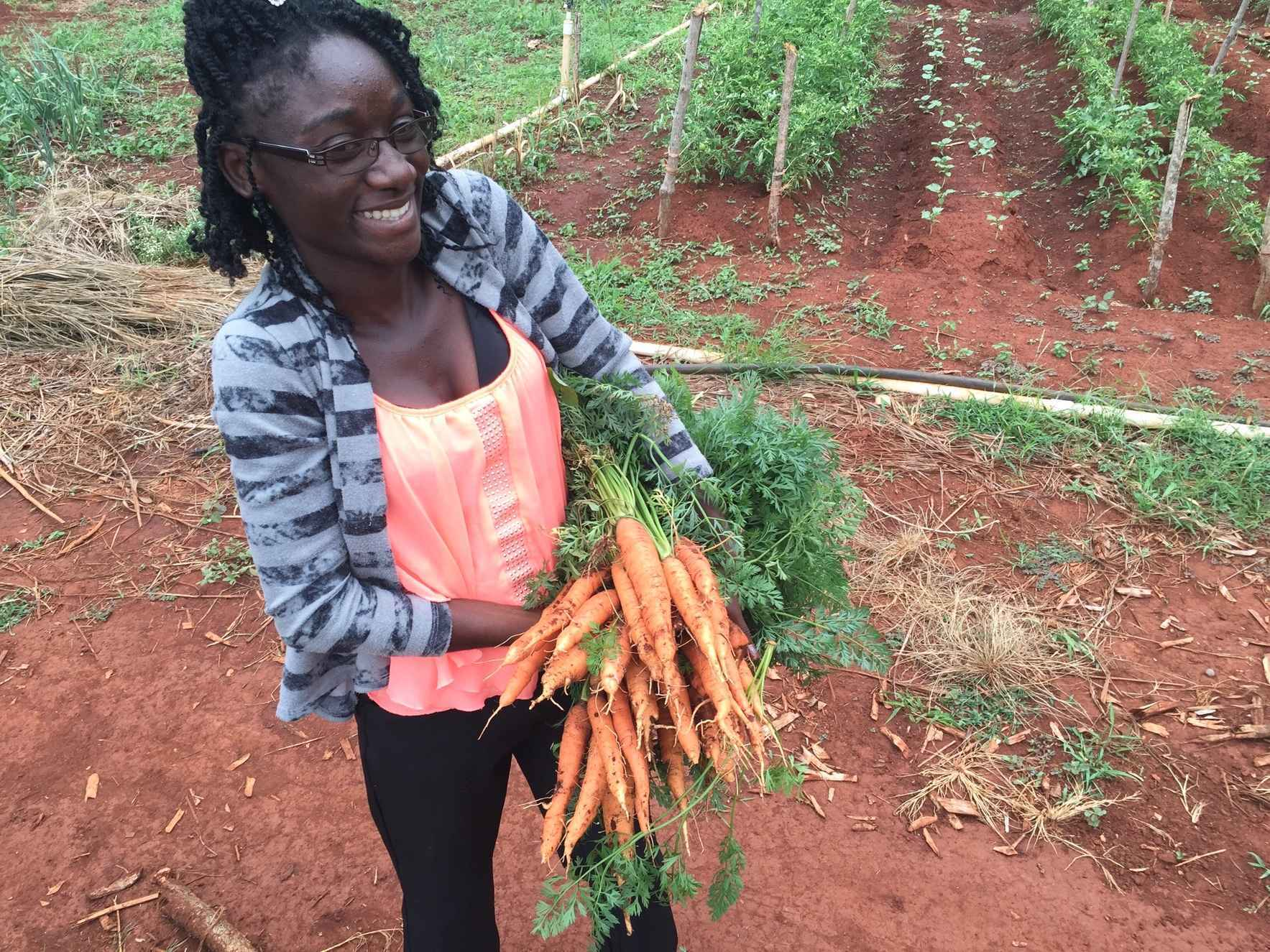 Donate now and help train young Jamaicans in Organic Agriculture  image