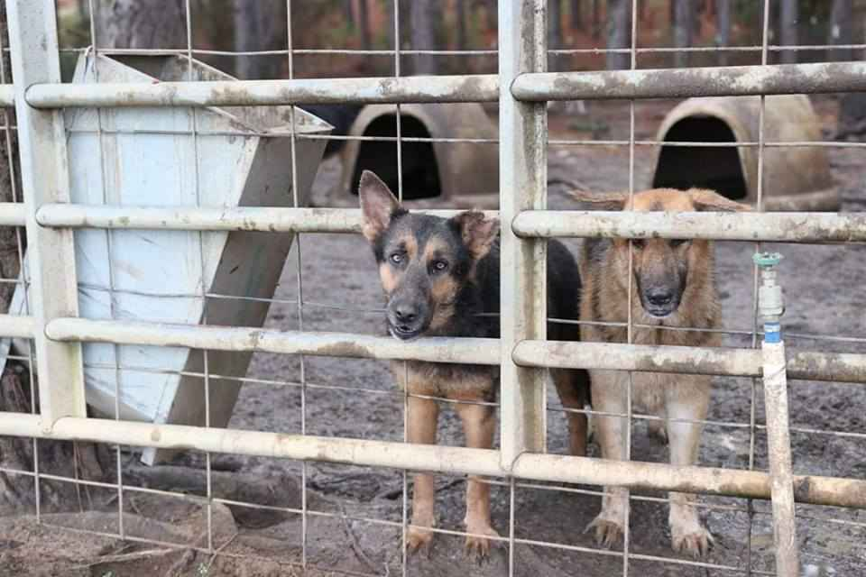 Donations are needed to help assist with dogs of South GA Puppy Mill Neglect Case image