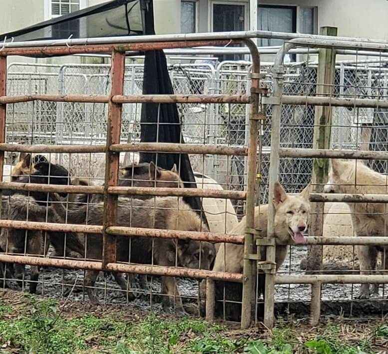 Hundreds of Montgomery, Georgia Dogs URGENTLY Need Your Help image
