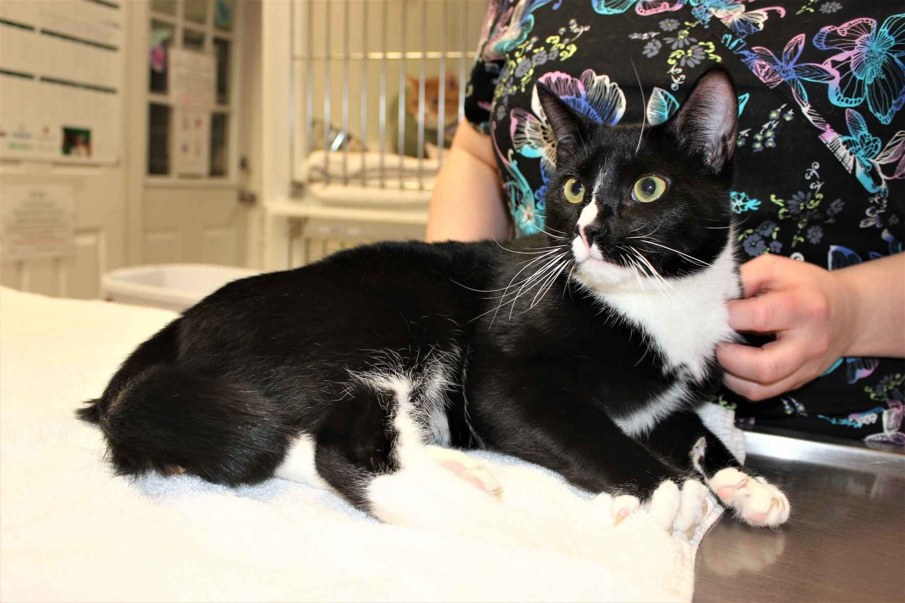 Let's Get Bootsie, the World's Sweetest Cat, Back on His Feet! image