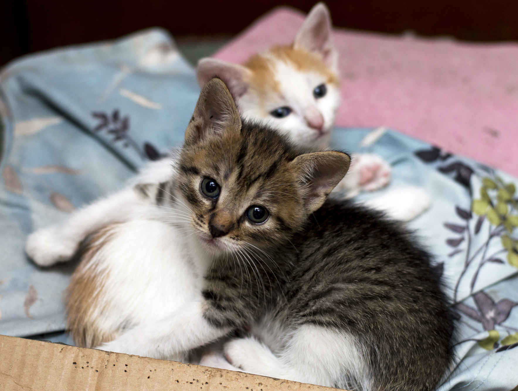 Donate now to provide veterinary care to homeless cats! image