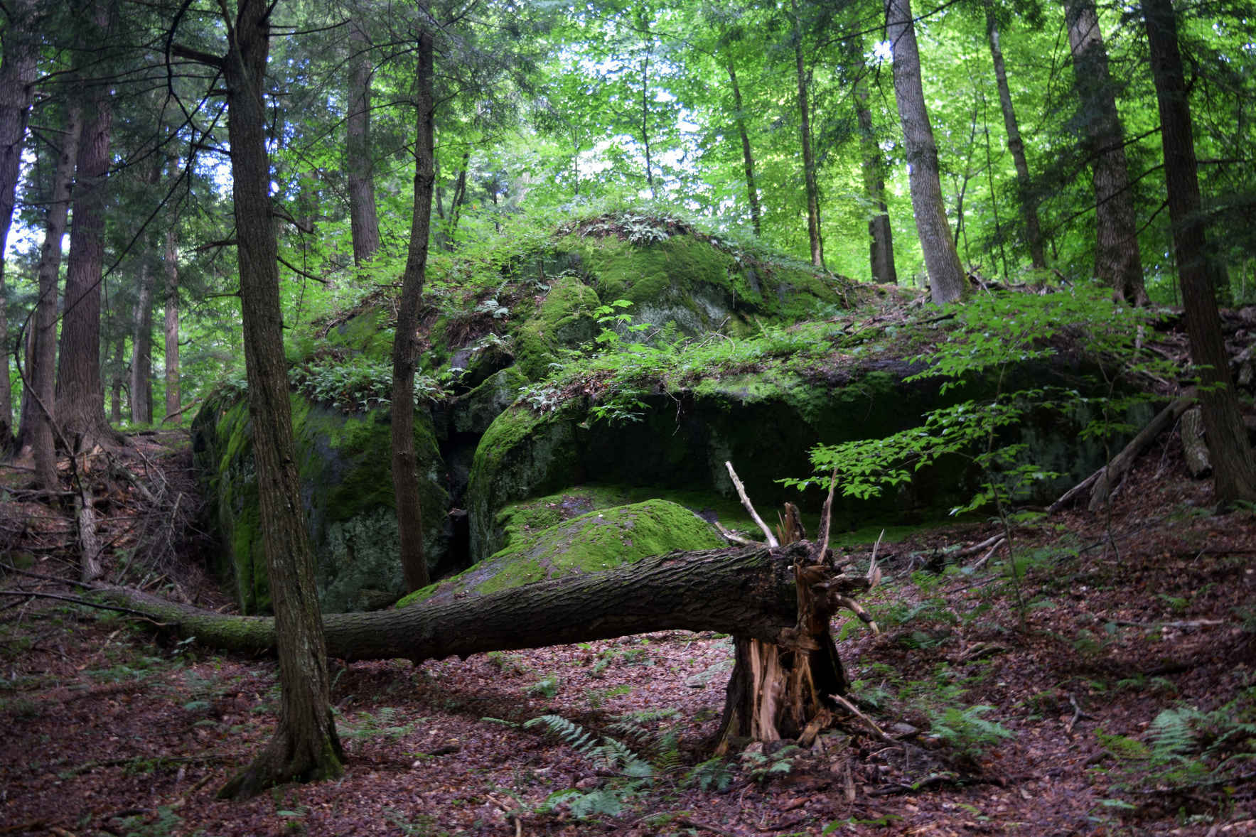 Support the Resurgence: Forest & Climate Movement Convergence image