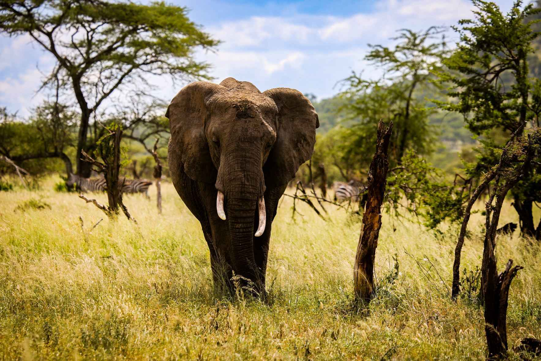 We need support to track down the culprits behind the killing of elephants and help law enforcement agencies rein them in before they strike again. image