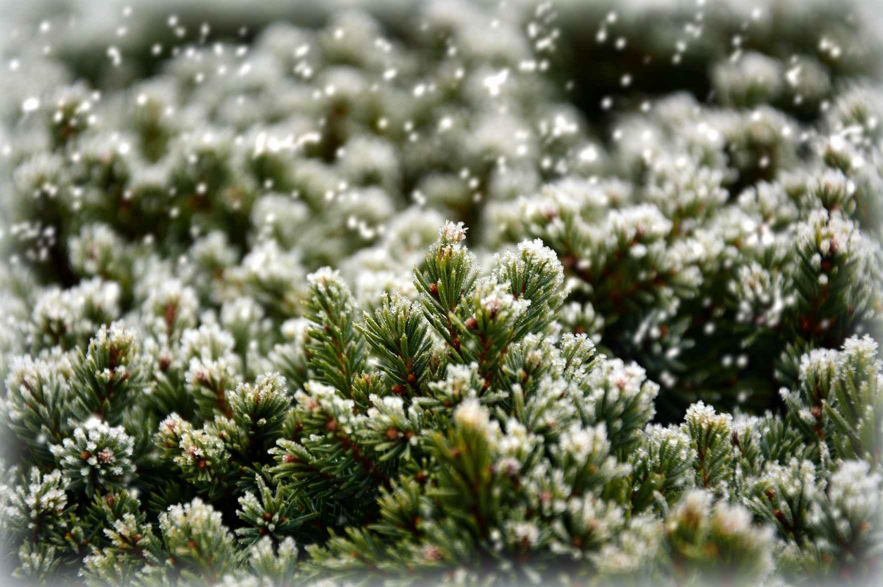 Make The Holidays Brighter This Season image
