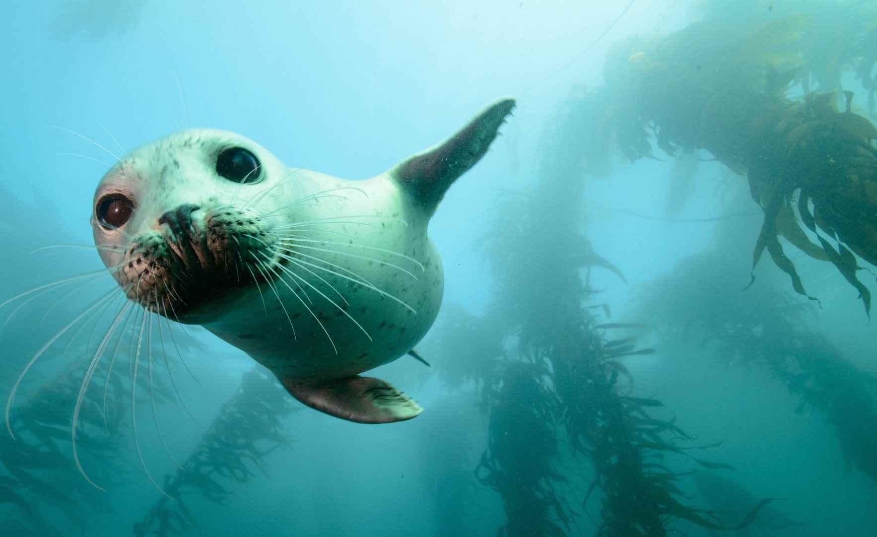 Protect Ocean Wildlife image