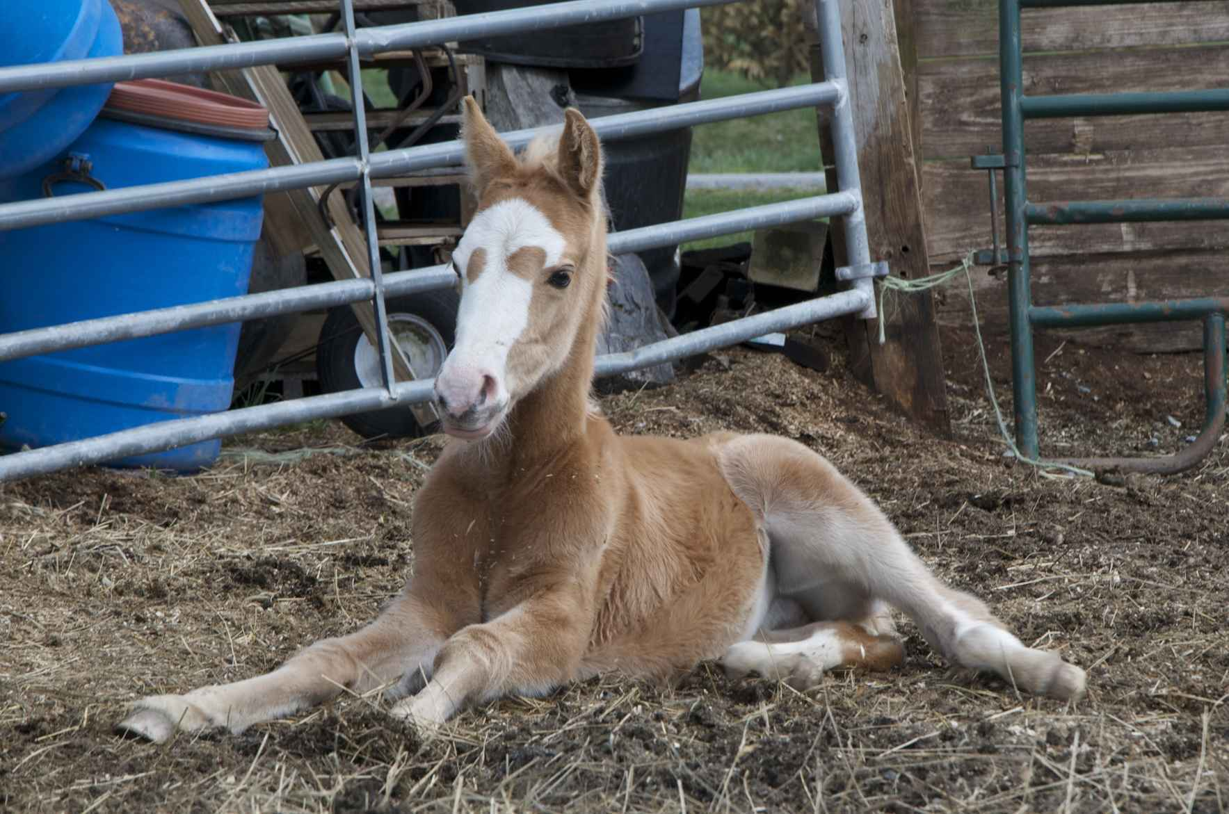 YOU MAKE A DIFFERENCE FOR HORSES IN NEED image
