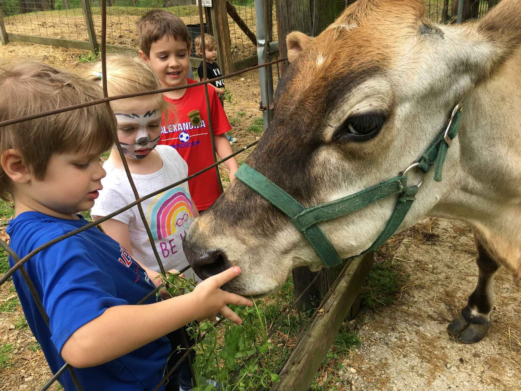 Your donation can help us bring our new dairy cow home! image