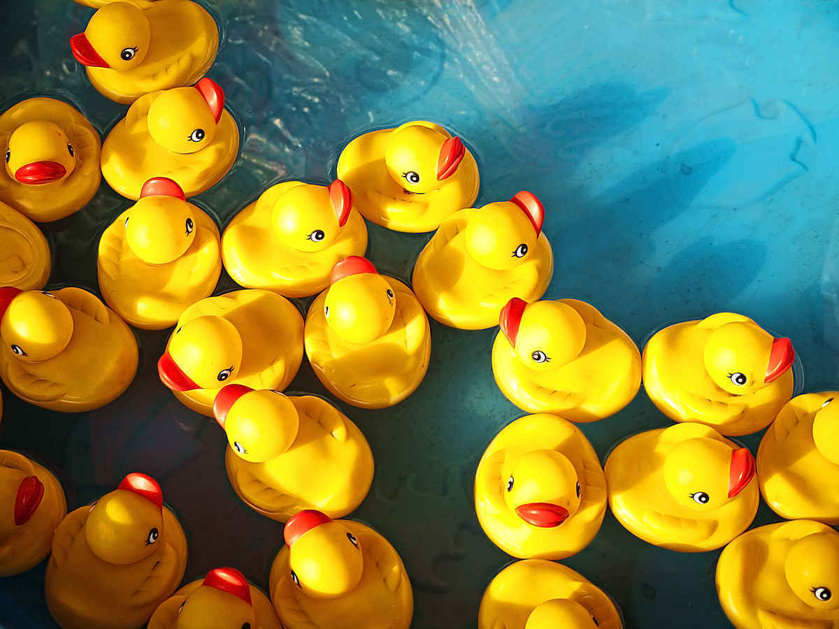Adopt Your Ducks! Only $5 each. image