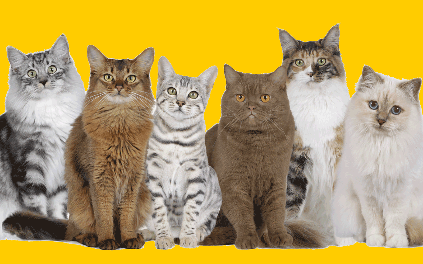 Adopt a Cat with a Passport image