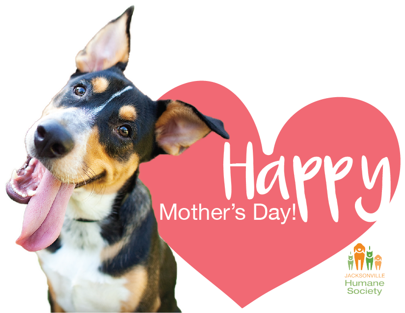 Send a gift for the animals this Mother's Day! image